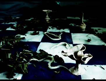 Aniation flm, Video Art, made with the stop motion technique, a doll, worms, leaves, a checkered blue floor. By Barbara Agreste.