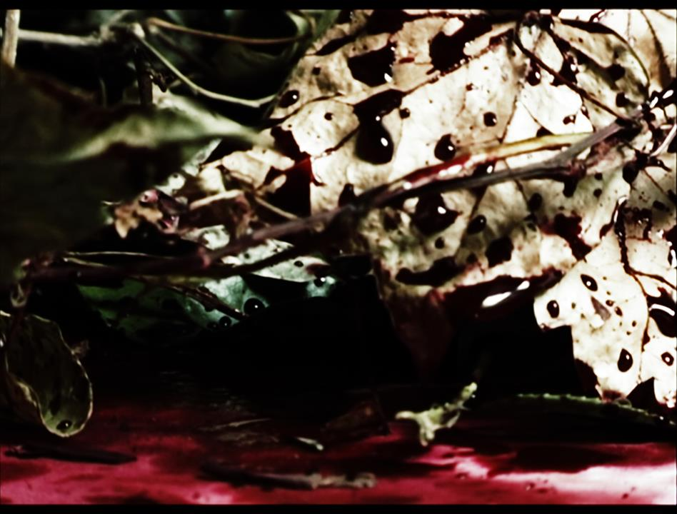 Puzzle Series, video art by Barbara Agreste, frame with blood on a leaf, short art film.