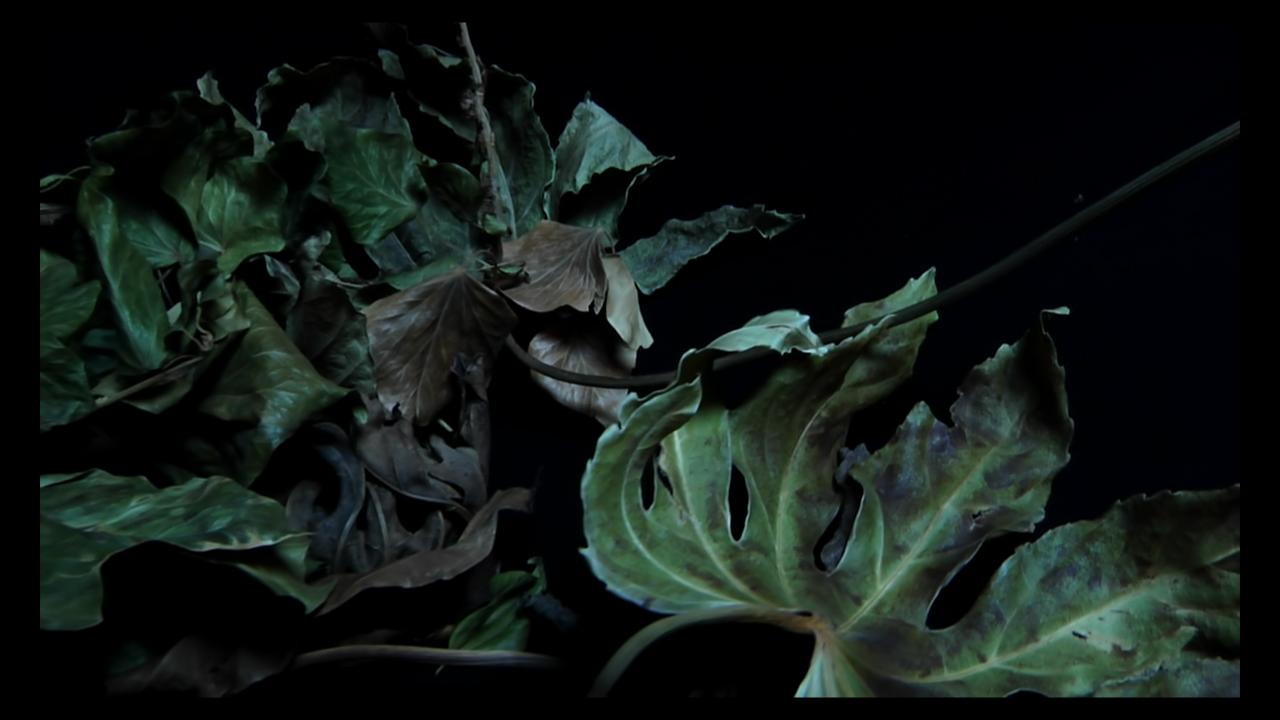 Cyanide Video Art Leaves Doll